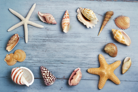 collection of seashells on blue wooden board