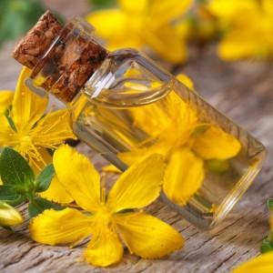 sarı kantaron bitkisi